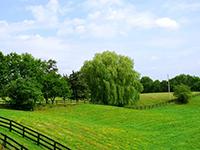 завещание на земельный участок плюсы и минусы
