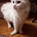 В Астрахани ищут хозяина котику с перебитыми лапками, которого бросили хозяйки