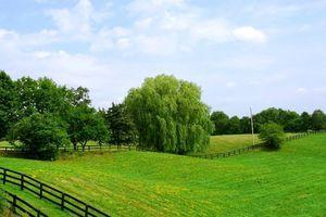 Правила составления предварительного договора купли-продажи земельного участка