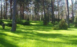 Составление предварительного договора купли-продажи земельного участка по законам РФ