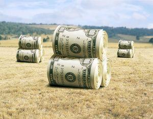 Приоритетные направления сельского хозяйства для предоставления субсидий
